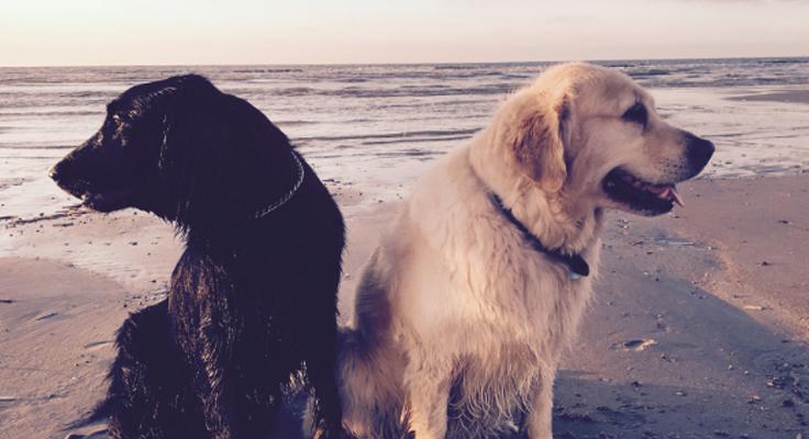 honden op strand